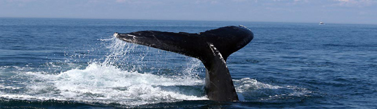 Cape Town Whale-watching-tours